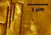 Домен на монокристале глицина (амлитуда)